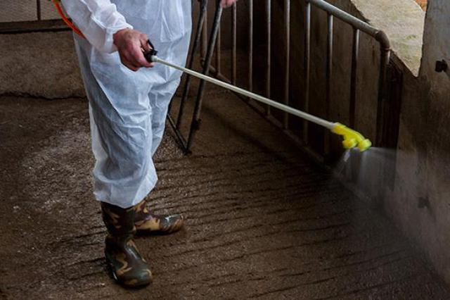 中国又一省排查出非洲猪瘟疫情 发病2头、死亡2头