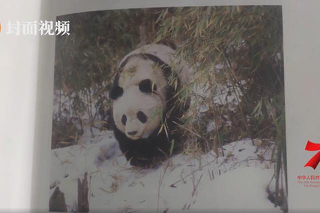"""守护国宝的""""国宝老人"""":我与熊猫45年"""