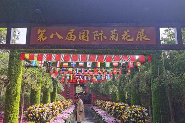 中外800个菊花品种亮相开封国际菊花展