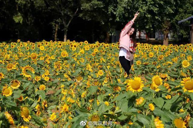 """看""""神奇植物""""为""""90岁""""中山植物园庆生"""