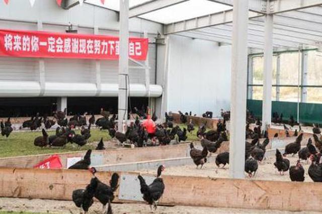 """南通一养鸡场办""""双11誓师大会"""":定KPI产百万颗鸡蛋"""
