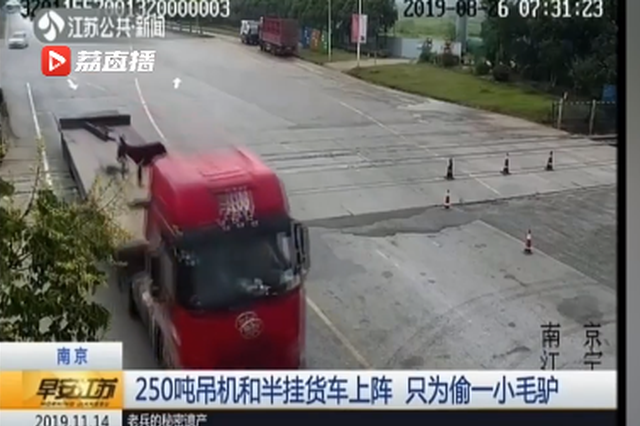 货车司机用250吨吊机偷一只小毛驴:天上龙肉地上驴肉 想尝尝