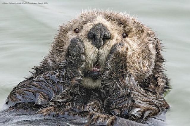 第五届搞笑野生动物摄影大赛获奖作品赏