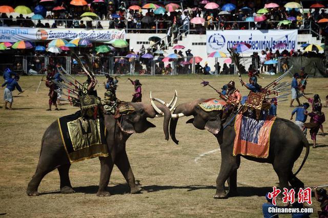 泰国素林府大象节场面宏大 重现古代骑象打仗