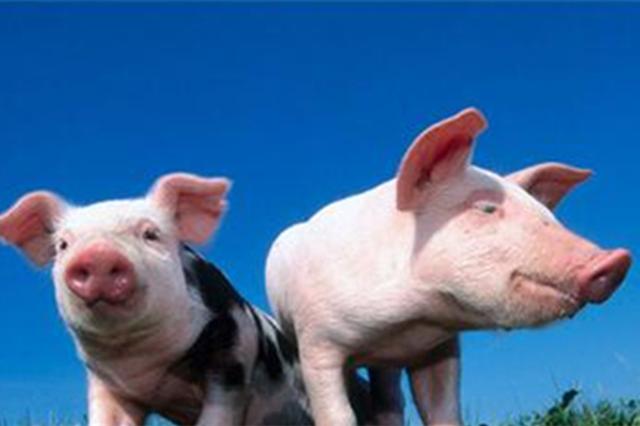 """南京出台意见稳定生猪生产 确保""""两节""""猪肉投放量"""
