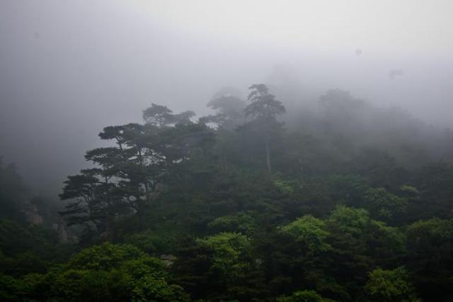 气象台发布大雾黄色预警 苏北将有强浓雾