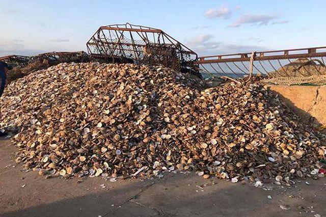獐子岛员工称采捕方法破坏生态:扇贝可能是呛死的