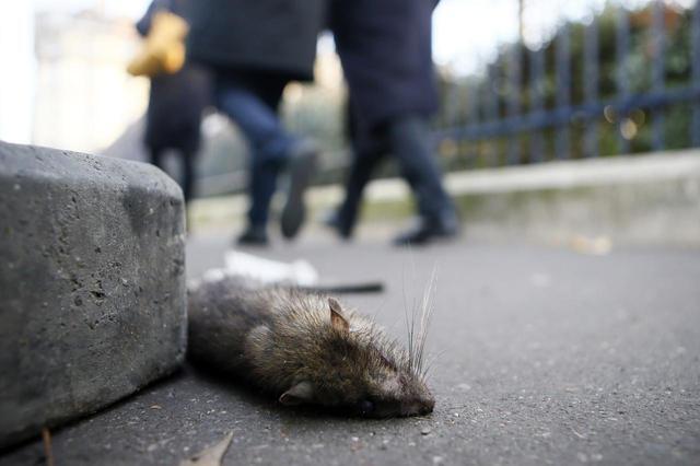 中疾控报告披露鼠疫患者细节:疑在自家农场挖土时感染