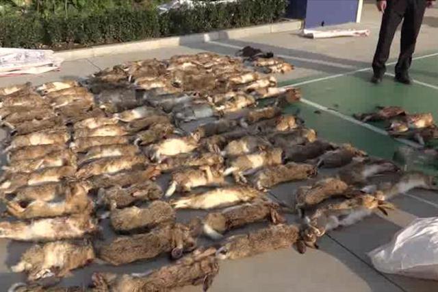 江苏响水6村民带猎狗捕杀野兔被抓