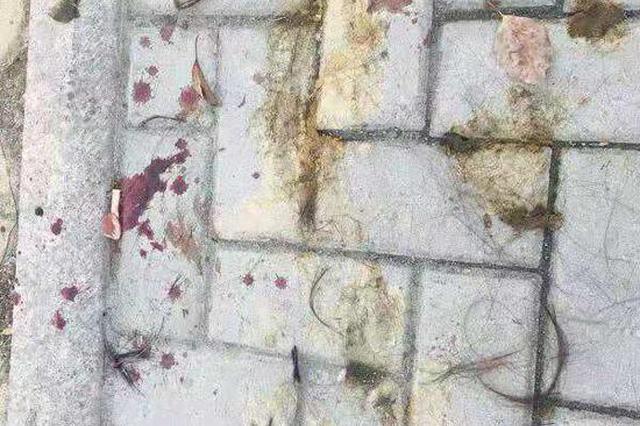温州一女子在路口遭公公和丈夫暴打,当地妇联和公安介入