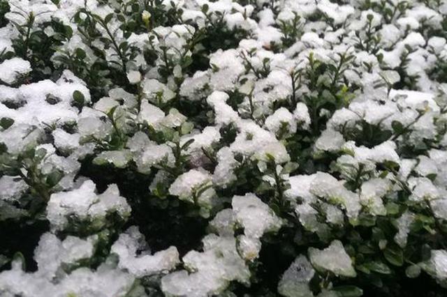 南京三月下雪:虽是少见 但也属正常现象