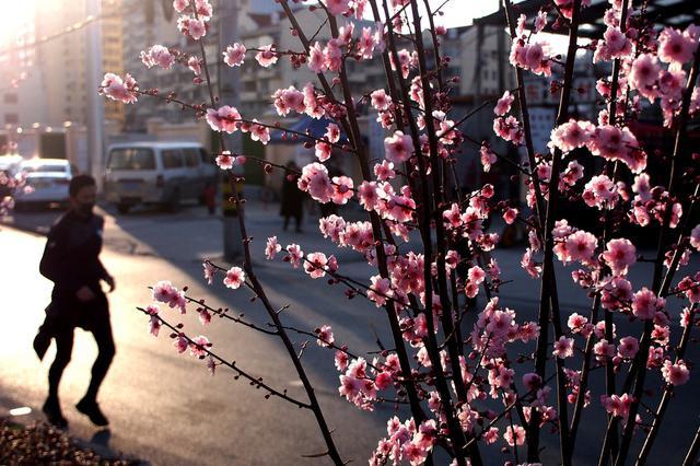 春回大地 江苏各地景区景点人气回暖