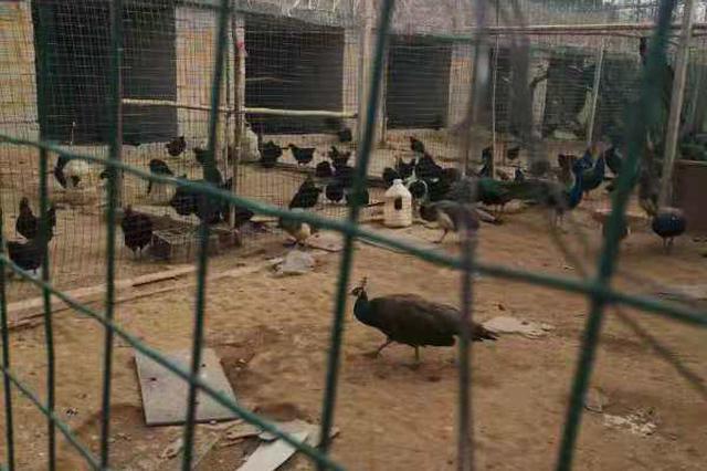 在栏野生动物咋处置、哪些养殖户有补偿?国家林草局明确