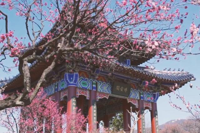 2020年江苏赏花地图