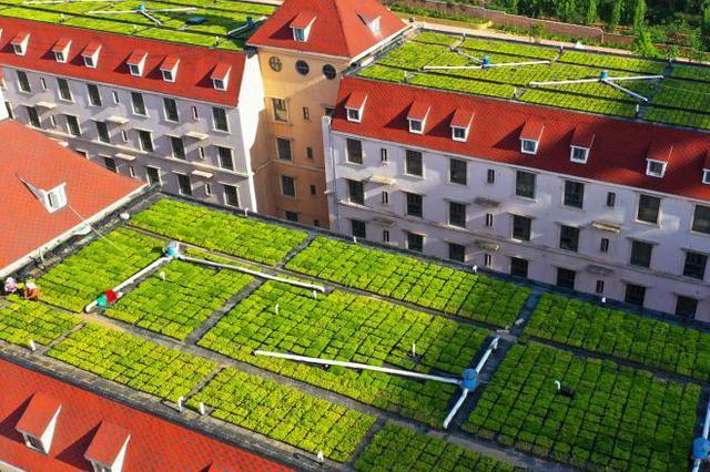 高校楼顶花园尽显绿意盎然
