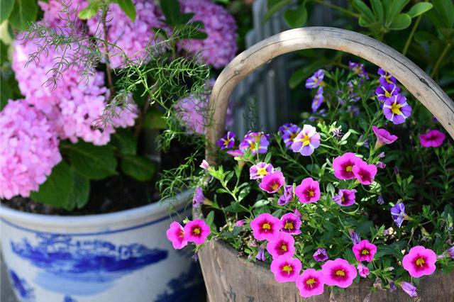 """把生活过成诗!""""70后""""家庭主妇用废旧物品种出满院鲜花"""