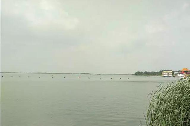 珍禽赤麻鸭现身南京江北省级湿地 全球只有约3万只