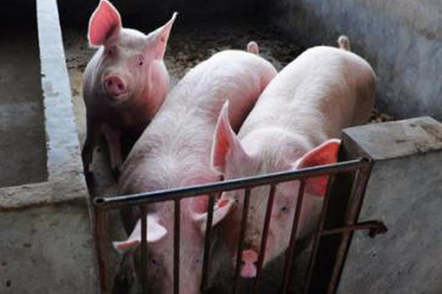 江苏出台细则促生猪复产:新增出栏1万头奖励100万元