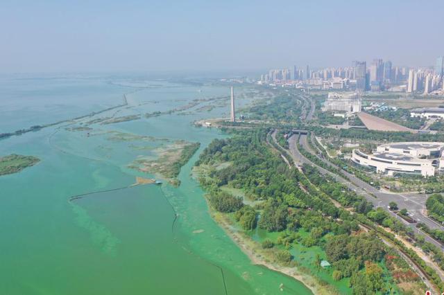 安徽巢湖蓝藻爆发 水面如泼绿漆