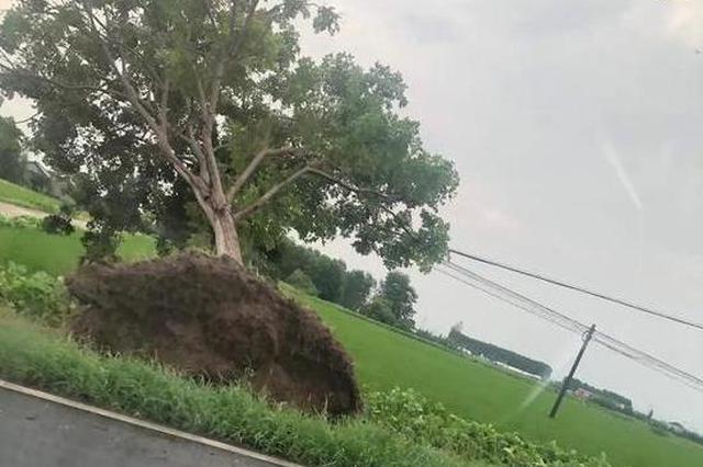 江苏海安南莫镇遭受大风强降雨袭击 约168处房屋受损