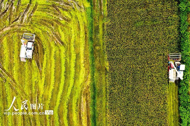 安徽庐江:水退人进 灾后自救