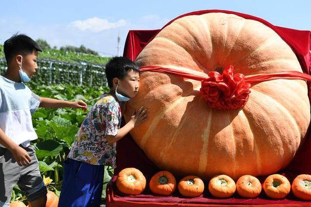 千斤巨型南瓜亮相农博会