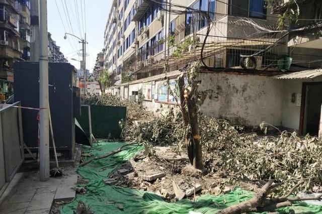 住建部通报成都桂花巷砍树事件:野蛮施工、乱砍乱伐