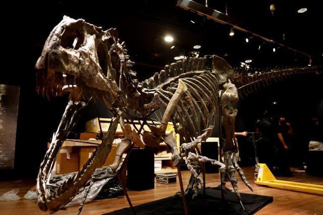 法国将拍卖异特龙骨架化石 售价超百万欧元