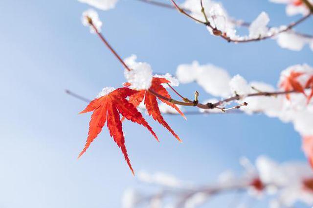 北方出现十月降雪,最冷冬天会来吗?权威解读来了!
