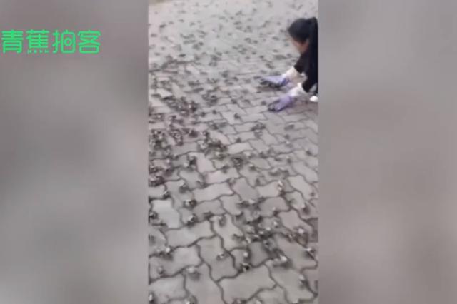 常熟数万螃蟹上岸是灾难前兆?地震台和气象局回应