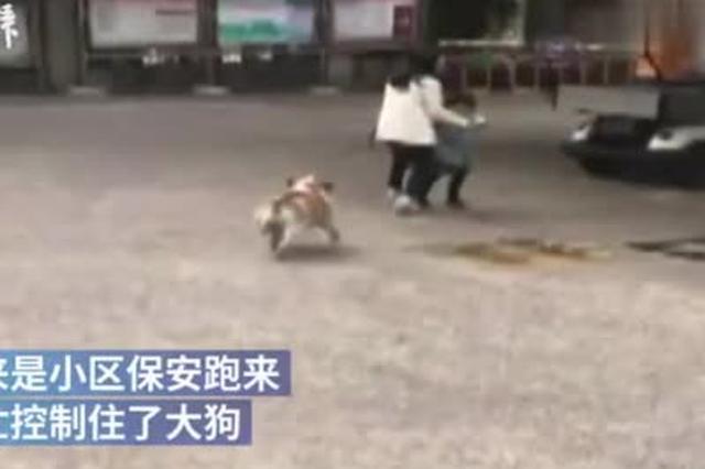 小区保安回忆斗牛犬扑咬女童:骑狗身上抓耳朵制服