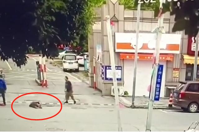 """南通官方回应""""城管拎起老人摔在地上"""":成立调查组展开调查"""