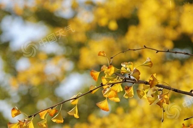 江苏失联已久的秋天终于回来了 莫负美好秋色