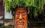 全球最奇特树木 你见过多少?