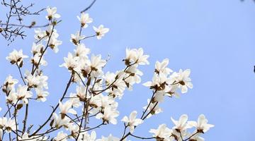 春季赏花指南来了!