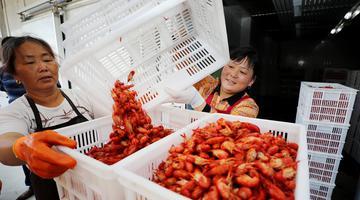 """100元买5斤!今年小龙虾价格""""亲民"""""""