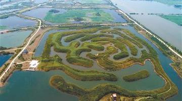 淮安白马湖国家湿地公园芦苇迷宫