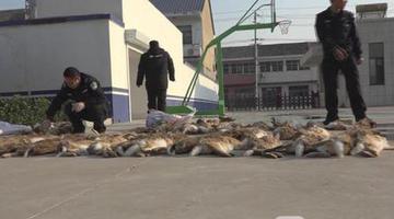 用狗捕杀野兔子六名涉案村民被抓