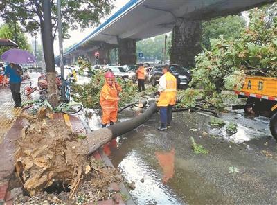 13日中午,南京盐仓桥广场一棵臭椿树被大风刮倒,园林部门工作人员进行清理,恢复交通。 通讯员 刘 兵 新华报业视觉中心记者 宋 宁摄