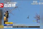 绿头鸭半空中被风筝线缠住 公园出动起吊机营救