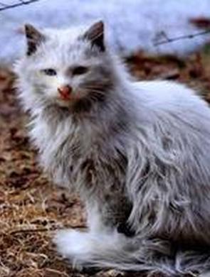 网曝扬州瘦西湖打杀流浪猫?