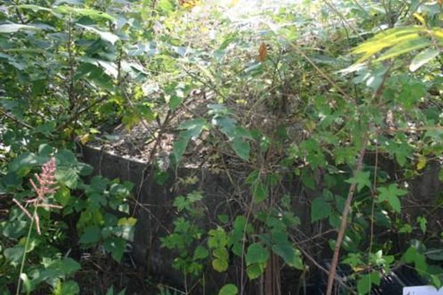 南京汤山作厂新发现一座抗战碉堡
