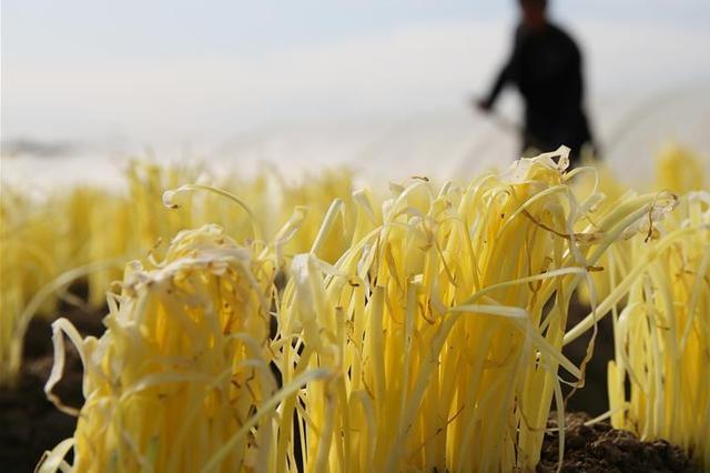 江苏明确目标:2020年粮油加工业总值3000亿以上