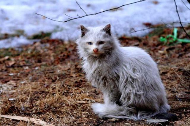 网曝扬州瘦西湖打杀流浪猫?景区正式回应