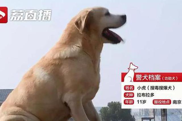 激萌!江苏最厉害的警犬有几句祝福想对你说…