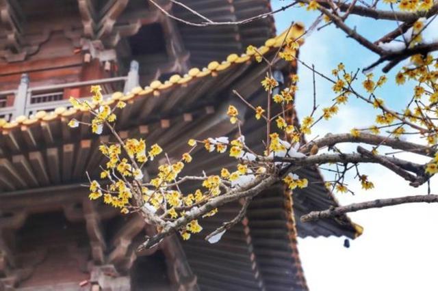 """南京""""春节黄金周""""接待游客552万 家庭出游成主力军"""