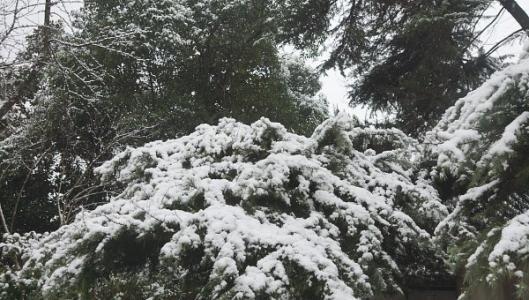 南京降雪量全省最大!今天仍有大雪到暴雪