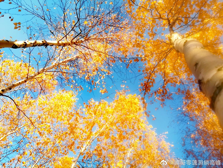 吉度光影:满园花菊郁金黄 阶前梧叶已秋声