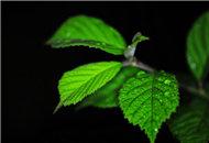 雨夜拍花 静心欣赏每一棵植物