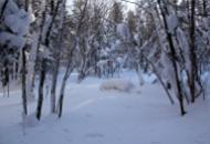 老里克湖荒沟穿越 观赏积雪和树挂